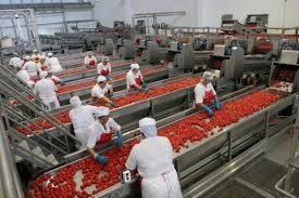 Anticimex Focus Industria Alimentare: con 58.413 imprese attive si conferma un comparto strategico per il Paese.